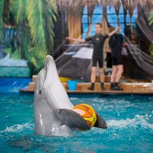 Дельфинарии, океанариумы Артема