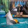 Дельфинарии, океанариумы в Артеме